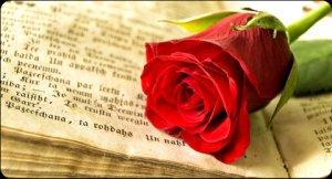 taller-rosas